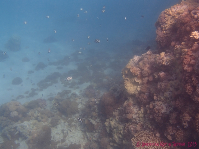 red sea © American Kat in Jeddah 2013