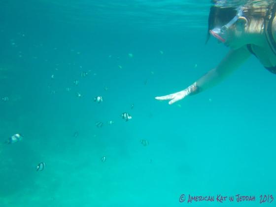 zebrafish are my homies  © American Kat in Jeddah 2013