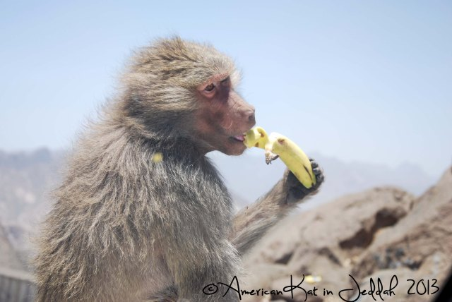 monkeys 2  © American Kat in Jeddah  2013