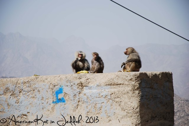monkeys 9  © American Kat in Jeddah  2013