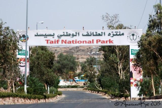 Taif National Park 1 ©American Kat 2013