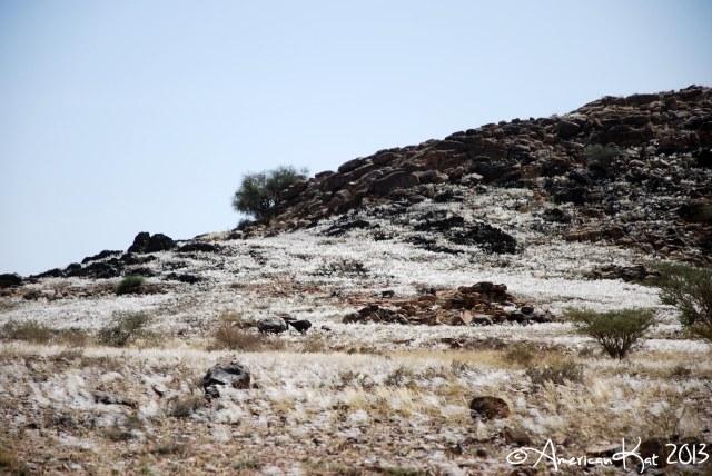 Taif National Park 3 ©American Kat 2013
