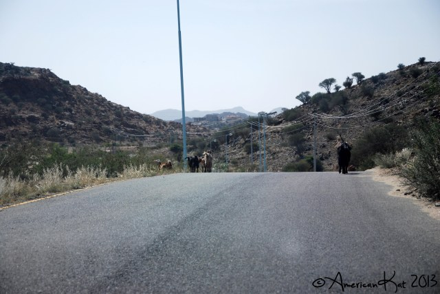 Taif National Park 6 ©American Kat 2013