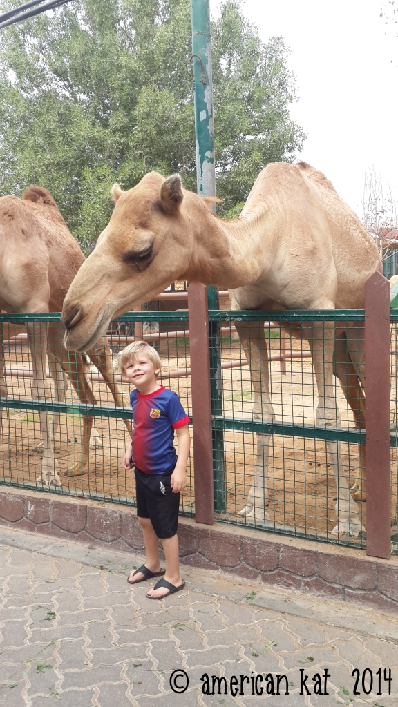 Cam's camel twin.